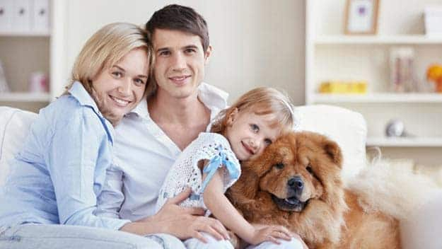 Wills & Trusts dog-young-family Direct Wills Old Trafford
